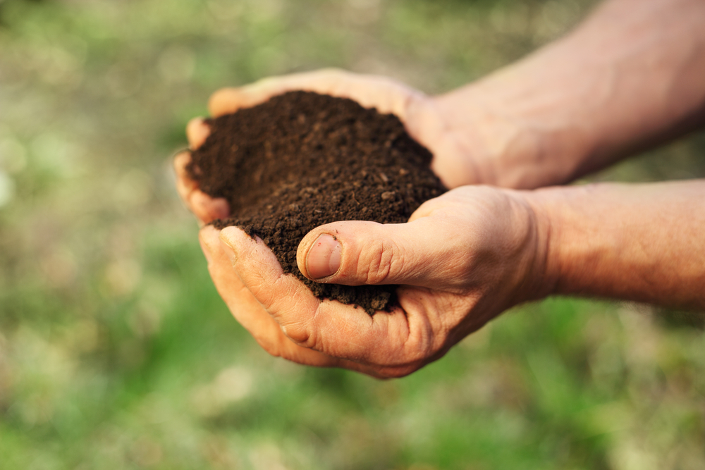 Hands holding healthy soil containing microbes with natural antidepressant qualities